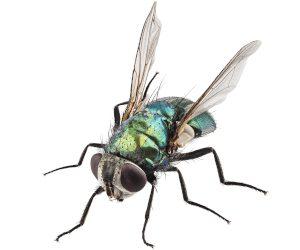 ISOTOX - Schutz vor Fliegen