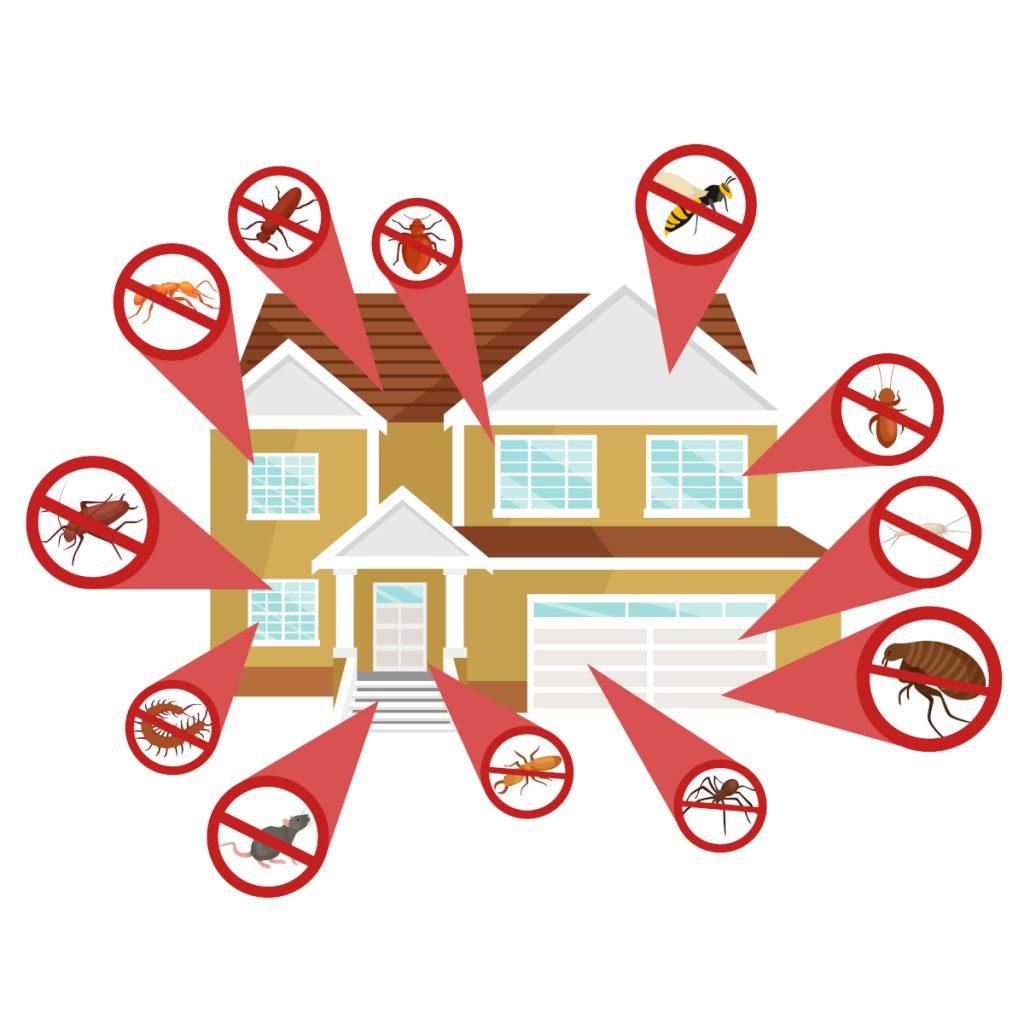 Schutz vor Schädlingen für Haus- und Immobilien-Verwaltungen