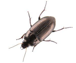 ISOTOX - Schutz vor Käfern & Vorratsschädlingen