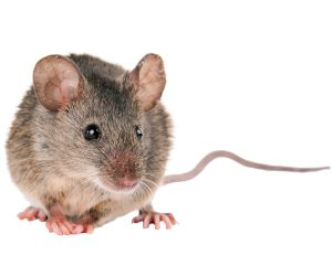 ISOTOX - Schutz vor Mäusen
